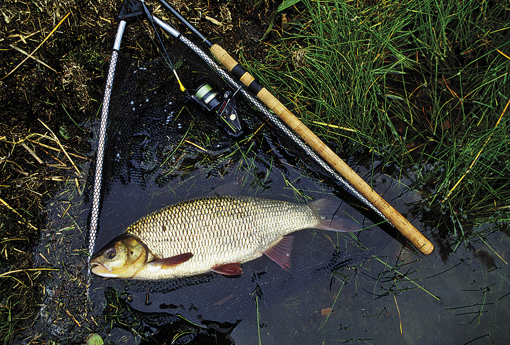 Ryby datovania UK